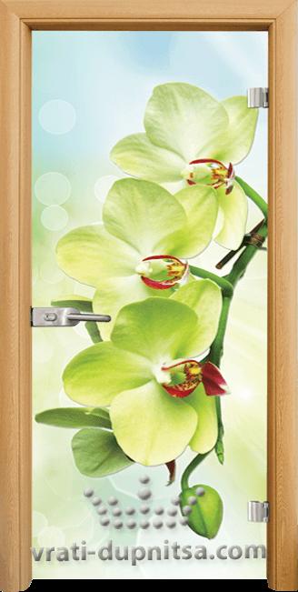 Стъклена интериорна врата модел Print G 13-3 Green