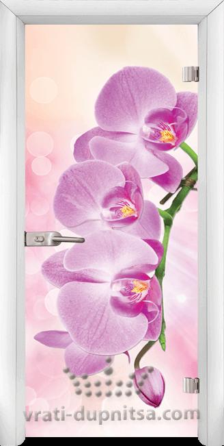 Print G 13 3 Pink W